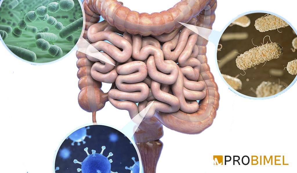 probioticos naturales microbiota intestinal